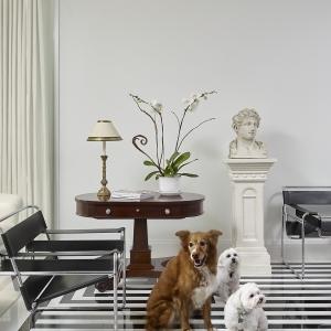 Robert Burg_Office_Dogs